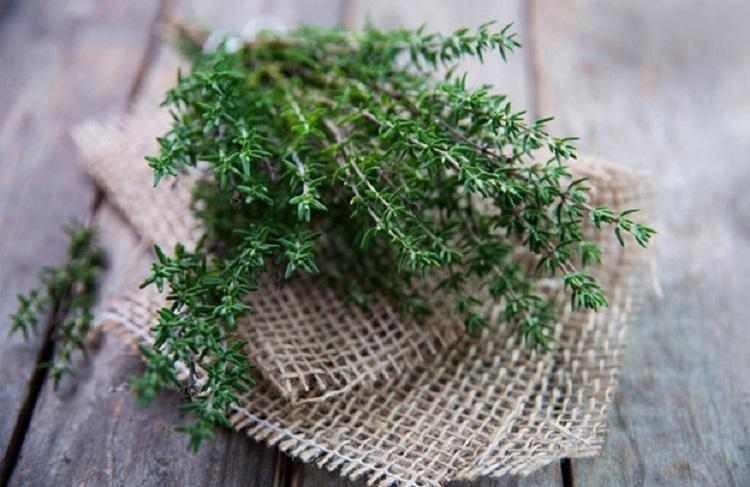 Mẹo trị ho bằng cỏ xạ hương