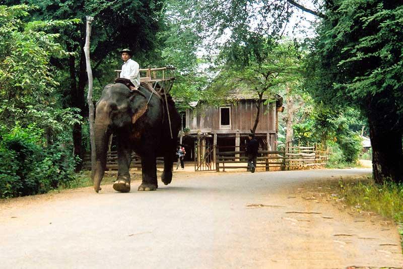 Khi nhắc đến địa danh Buôn Đôn thì ắt hẳn ta không thể không kể đến truyền thống thuần dưỡng và săn bắt voi rừng ở nơi đâ